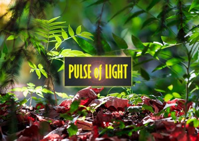 Pulse of Life – Photography website (portfolio)