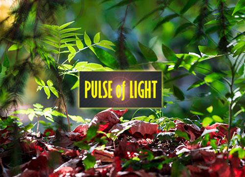 Pulse of Life – Photography website (portfolio)